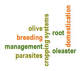 Pestolive olive breeding domestication