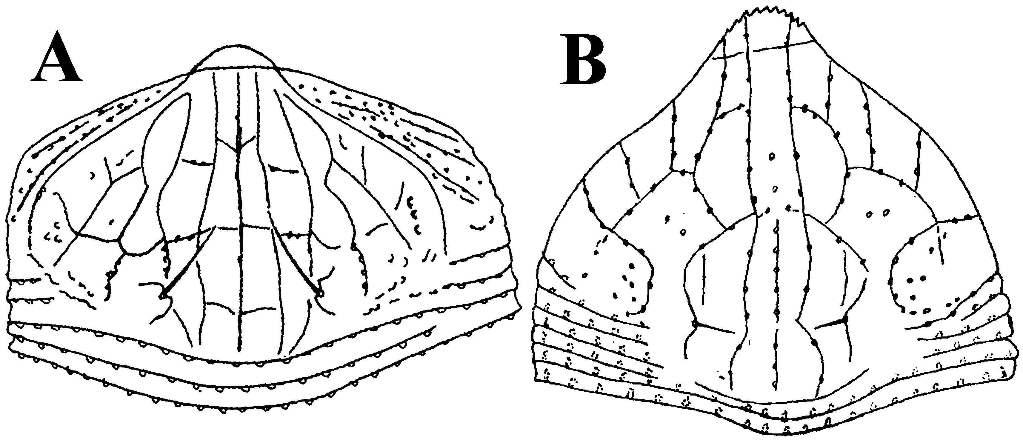 Eriophyoid Mites From Ferns Description Of A New Leipothrix Keifer