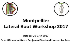 Lateral Root Workshop