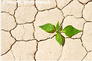 How drought affects plant roots