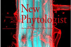 L'accumulation et le transport des coumarines chez Arabidopsis thaliana est un processus complexe et dynamique