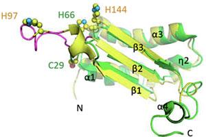 Est ce que les glutarédoxines et les protéines BOLA jouent un rôle dans la perception du statut en fer cellulaire chez les plantes ?